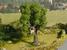 Tree with Tree House