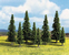 Model Spruce Trees, 10 pcs., 6 - 15 cm high